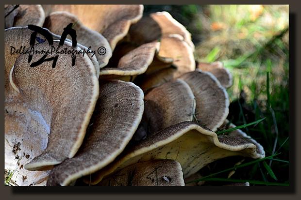 Maitake mushrooms-Baarlo2014
